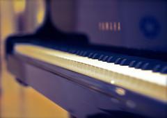 piano, musical keyboard, keyboard, close-up, blue, player piano,