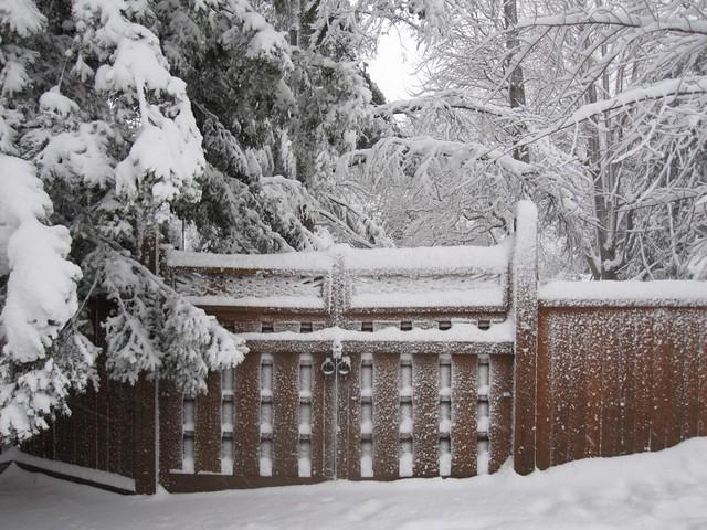 Winter at BBG. Photo by Rebecca Bullene.