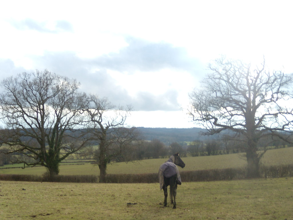 Horse in a field Stonegate to Robertsbridge