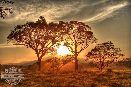santa trees sol silhouette brasil sunrise gold interior bolivar dourado pôrdosol campo catarina hdr campeche árvores itajai trindade poente silhuetas duetos