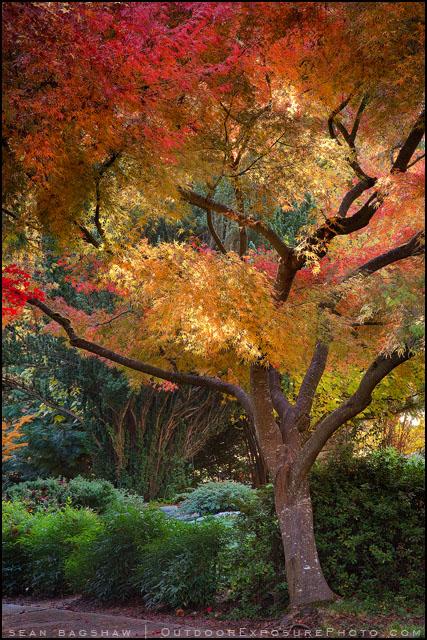 Japanese garden ashland oregon stunning colors and for Japanese garden colors