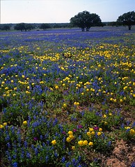 Dinner Bell Ranch -- Mixed Wildflowers #1