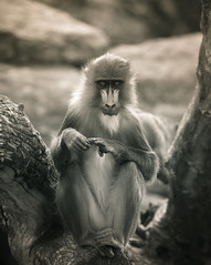 Mandrill is watching you.