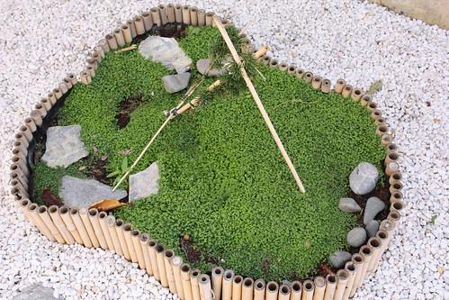 Du japon dans un jardin l 39 impressionnante progression de l 39 helxine - Couvre sol jardin japonais ...