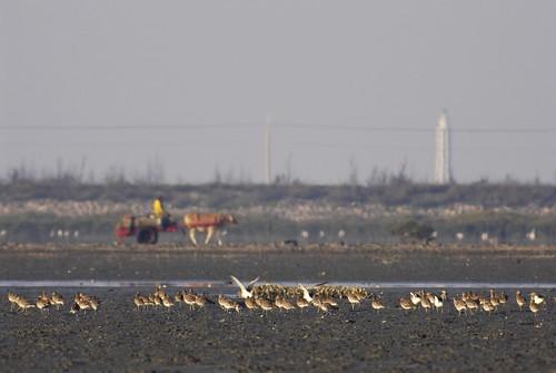鳥是生態環境的指標,鳥沒了,不當的開發讓大地資源耗竭,自然災害反撲後,才叫沒飯吃。圖片提供:彰化環保盟聯理事長蔡嘉陽