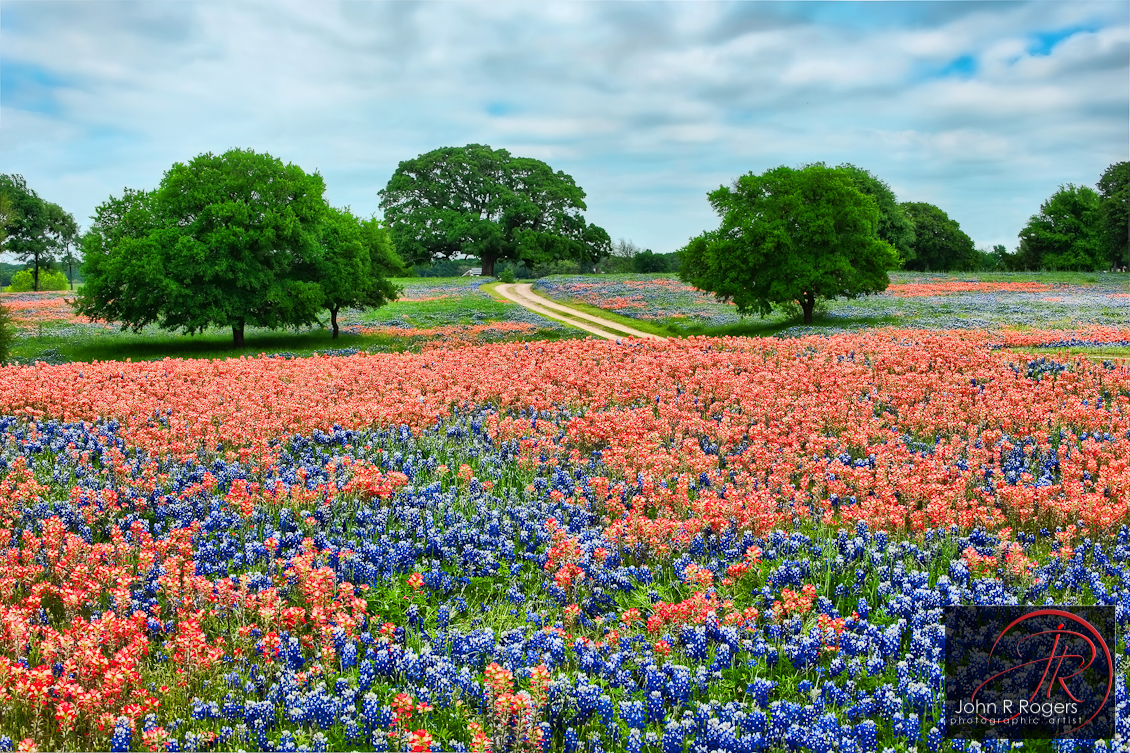 Bluebonnets, Indian Paintbrushes, & the Perfect Picnic