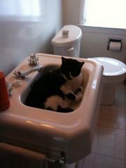 floor, toilet, room, plumbing fixture, tap, bathroom, sink,