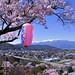 松本-たかとうじょし公園の桜-松本