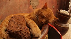 Cats sleep on top of large containers in the souks of Marrakech, in Morocco (@torrenegra).