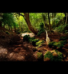 """"""" PUZZLE WOOD ~ THE FOREST OF DEAN """""""