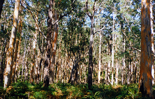 Margaret River bush, Western Australia, 1996