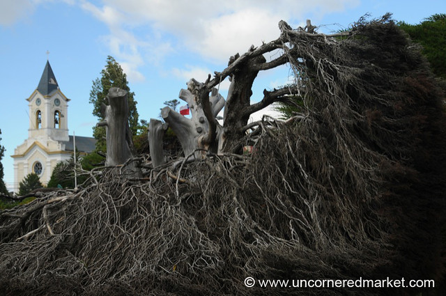Massive Roots and Church - Puerto Natales, Chile