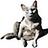 SCA_Chimera (47918138@N03) profile picture