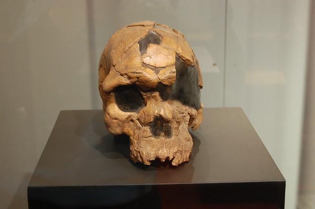 first homo sapiens found - photo #12