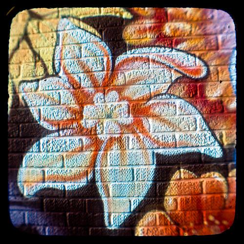 grafity kwiaty