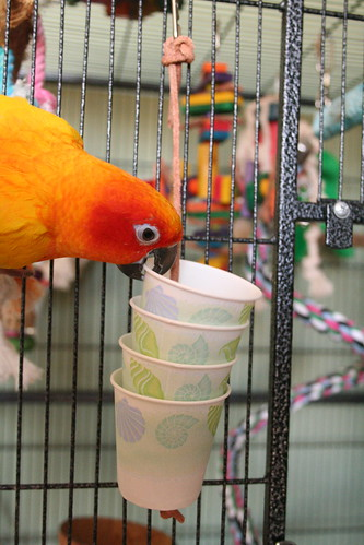 Diy Bird Toys : Dixie cup foraging toy best in flock parrot