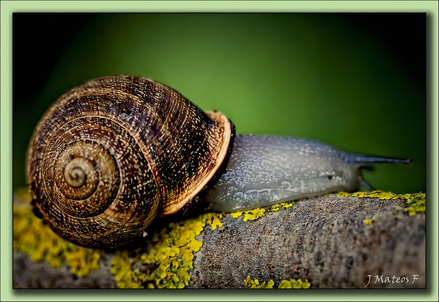 caracol en el jard n canario a photo on flickriver