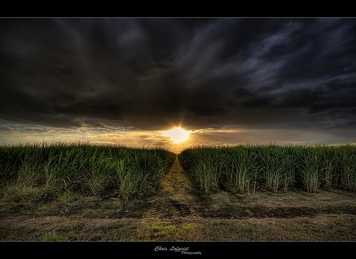light sunset path australia brisbane queensland hdr sigma1020 canefield canon7d woongoolpa