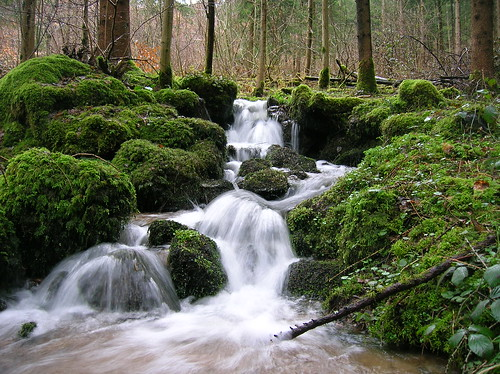 Black Forest Stream in Spring