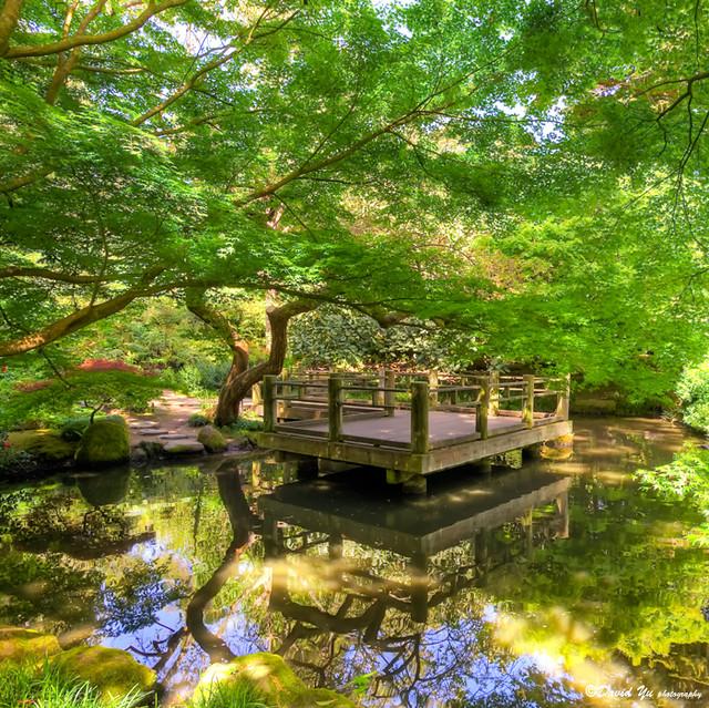 Japanese moon garden san francisco botanical garden for Japanese botanical garden