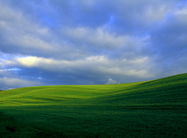 watermark for free - amazing grass
