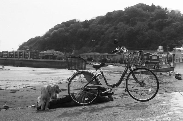 Bicycle and Dog