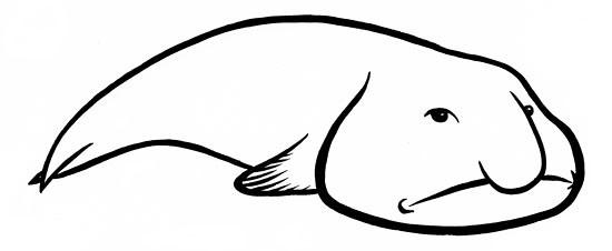 Blob Fish Drawing Sketch Coloring Page