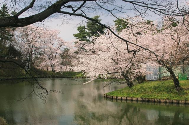Sakura-Matsuri fest. in Hirosaki Castle/IMGP0211