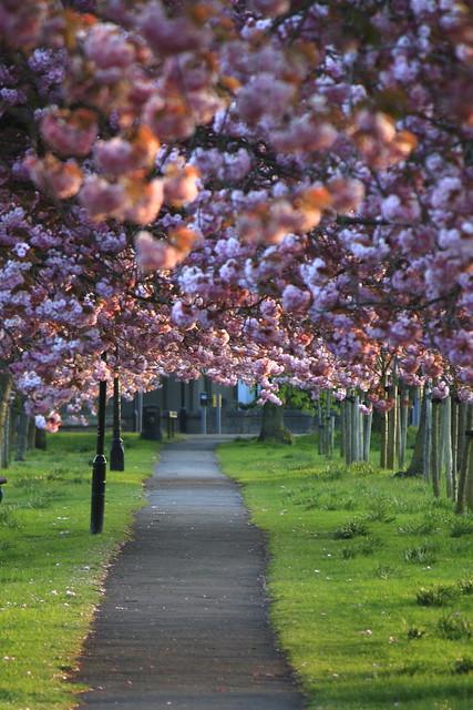Blossom Path