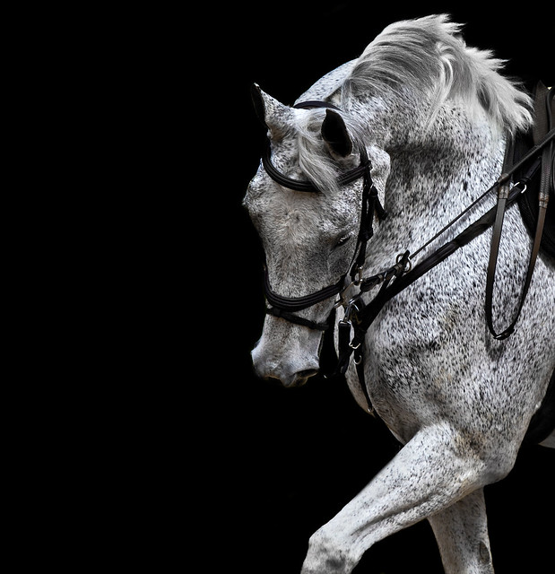 Beautiful horses a gallery on flickr