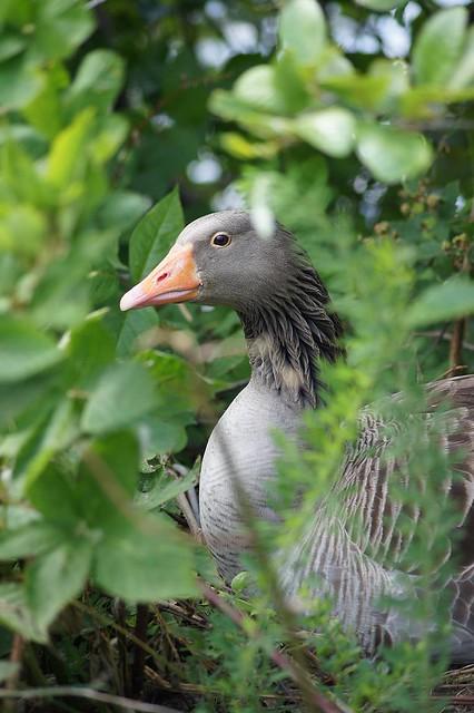 Best  Mother  Goose