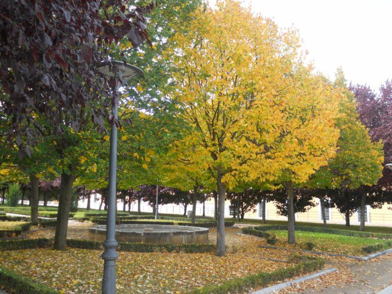 Tilo en otoño 2