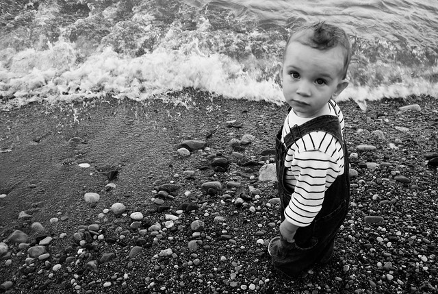 Carter Explores the Shore