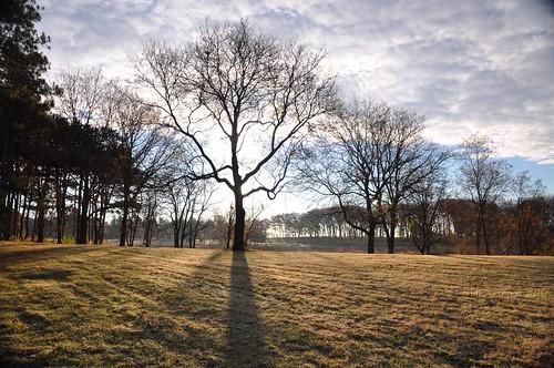 morning november autumn trees light shadow sky sunlight black cold tree fall field sunshine clouds turn dark season long frost branch seasons shade change giveway transition treeline mortonarboretum