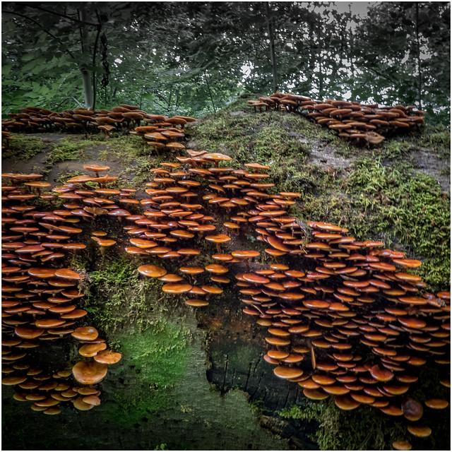 Mushrooms (explored 2/July/17), Panasonic DMC-TZ80