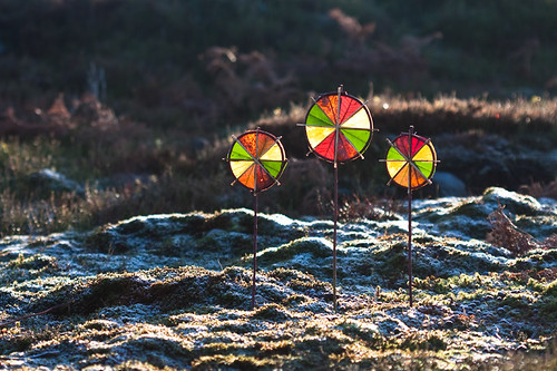 Frosty 4 Colour Sun Wheels
