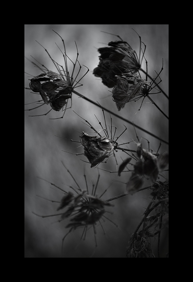 Photography: Spiders Grasp by Nicholas M Vivian