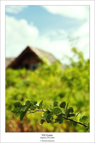 scenery bokeh srilanka ecotourism sigiriya viluyana jetwingviluyana