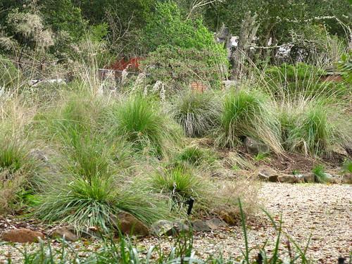 My Back 40 Feet The California Native Plant Garden In