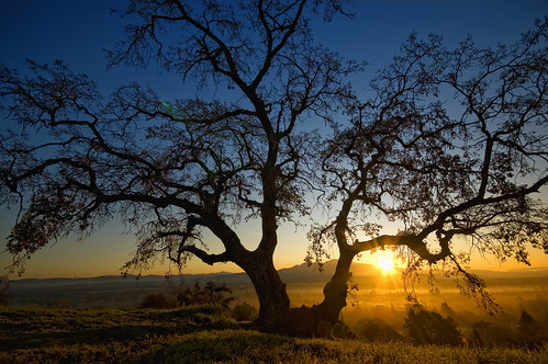 morning blue orange sun sunlight tree silhouette oak day branches clear bayarea walnutcreek mtdiablo pleasanthill contracosta giantoak