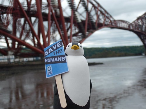 Penguin near Forth Bridge
