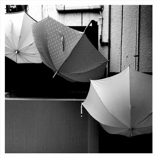 drying umbrellas