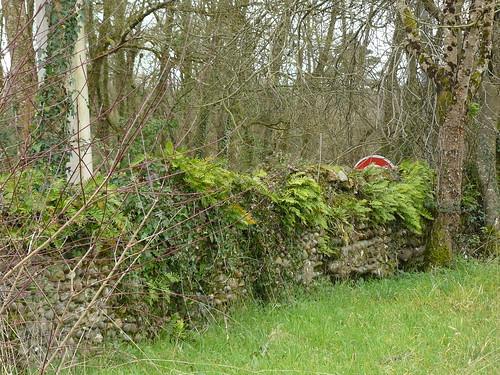 Saint Cricq-du-Gave (40), vieux mur couvert de fougères à l'entrée de l'impasse du château