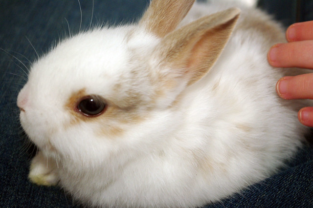smidgen bunny