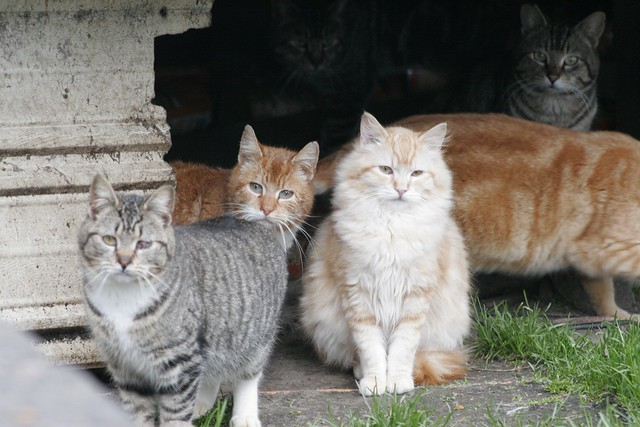 Many Feral Cats