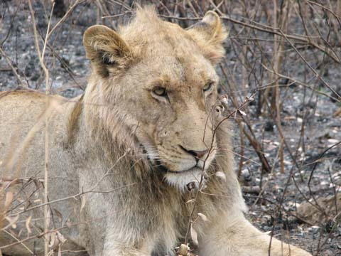 Safari Pictures 122