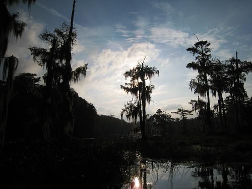 statepark trees sky florida wakullasprings edwardballwakullaspringsstatepark