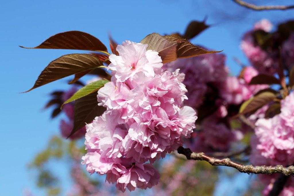 bloom sanpo