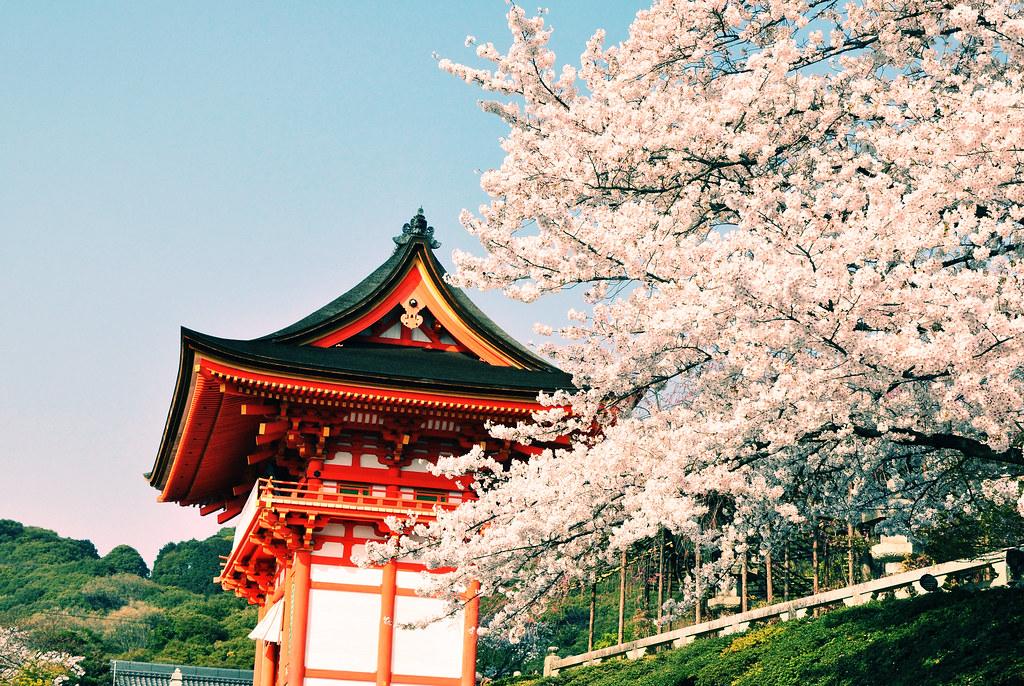 Cherry blossom in Kiyomizu
