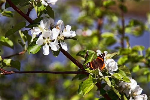 flowers summer canon butterfly geotagged is nb lei newbrunswick 7d sj usm dslr 2010 baseman saintjohn kouchibouguac 24105mm sjphoto nbphoto cans2s bmca baseman79